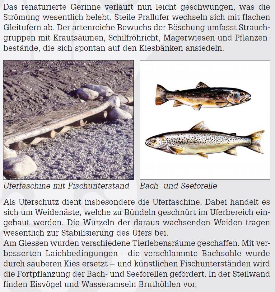 6_Uferfaschinen_am_Giessen.JPG
