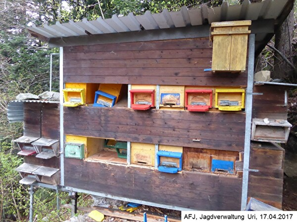 Schaden Bienenhaus Silenen