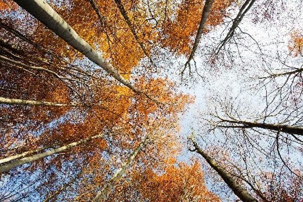 Bäume und Himmel