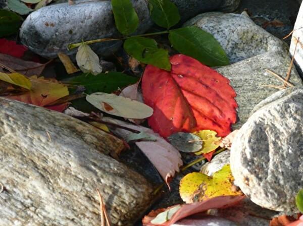 Steine mit Blätter