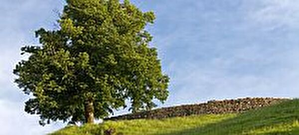 Ansicht Rotzburg