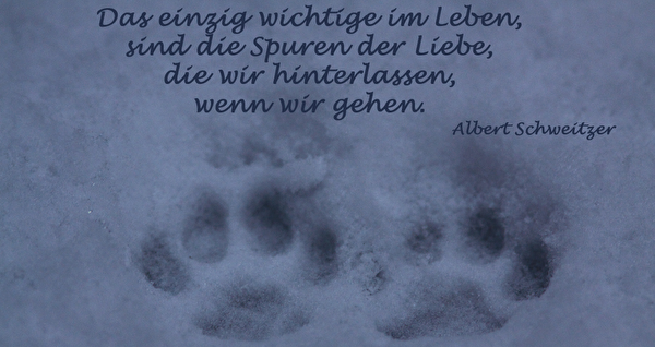 Spruch Albert Schweizer