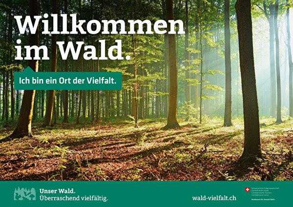 Willkommen im Wald
