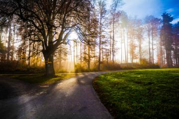 Bild Bossenhaus-Park