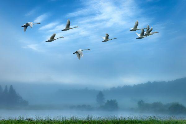 Vorüberziehende Vögel