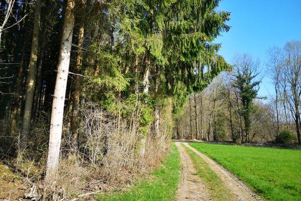 Spaziergang entlang des Waldes