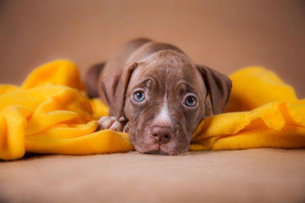 Hund auf einer Decke