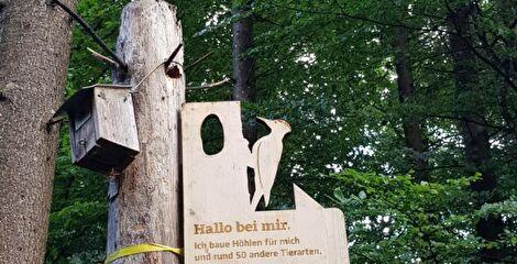 Parcour im Wald