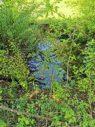 Bach mit Pflanzen