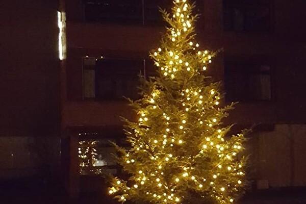 Der Tannenbaum beim Geisshubel-Schulhaus