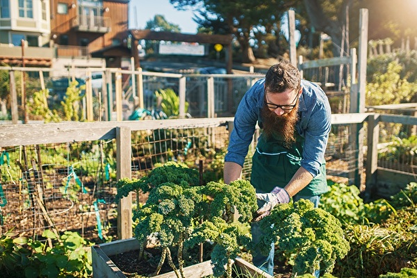 Zum Beispiel Federkohl aus der Holzkiste – so ist Gärtnern auch in städtischen Gebieten möglich.