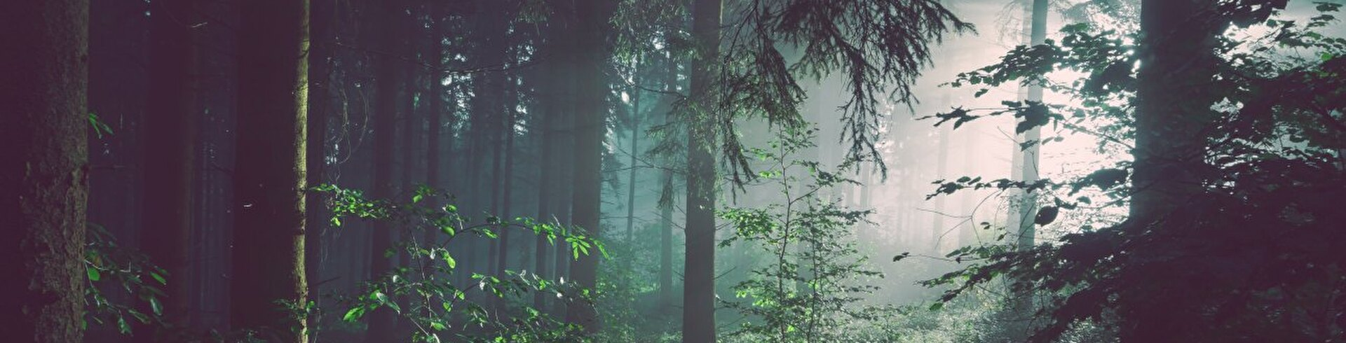Wald Photo by Sebastian Unrau on Unsplash
