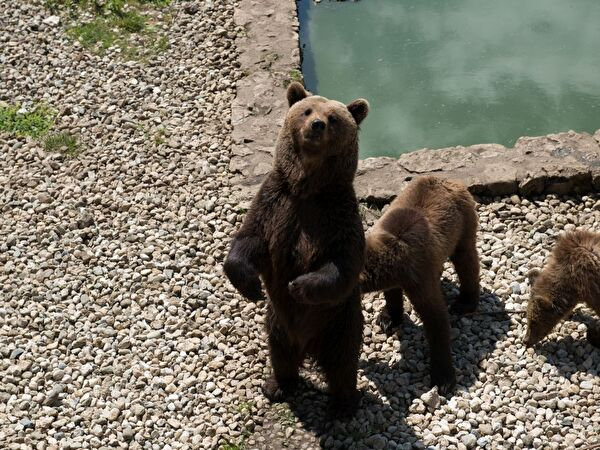 Bären im Juraparc