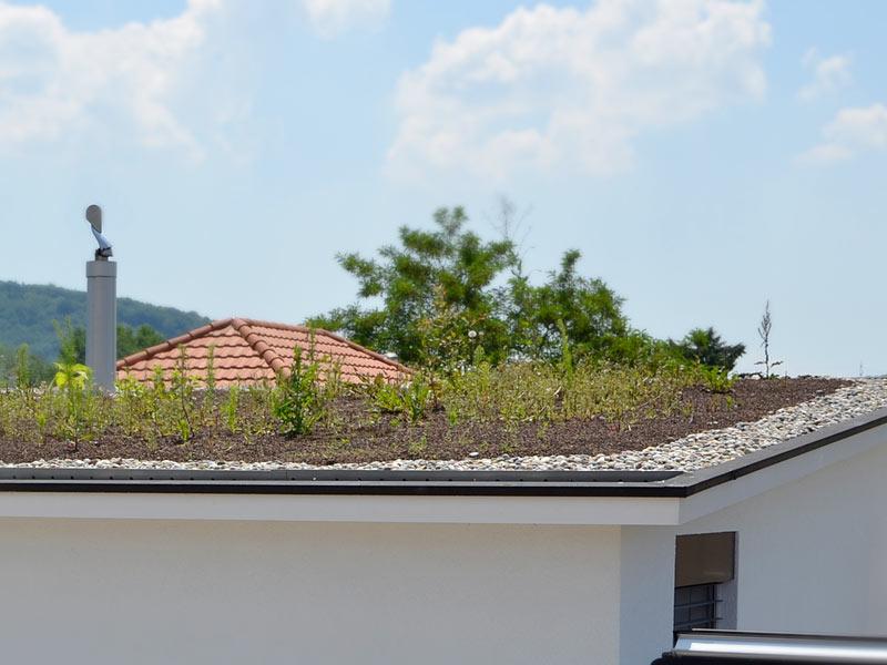 Bild eines begrünten Flachdachs