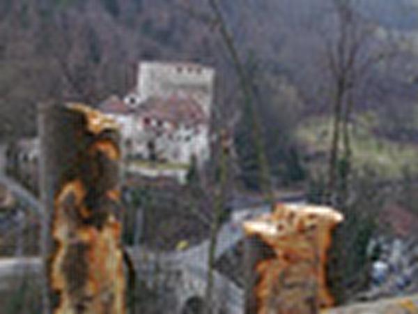 Waldarbeiten Angenstein