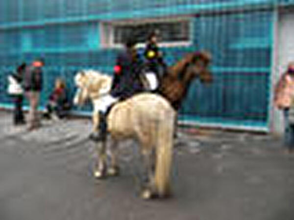 Bild Logo Island-Pferde Turnier