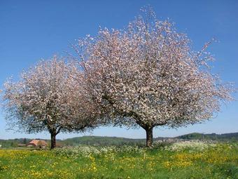 Foto von Bäumen