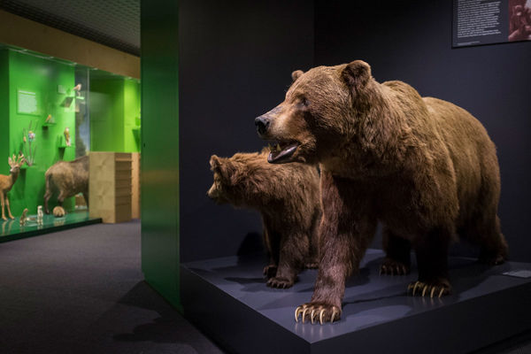 Das Naturmuseum Solothurn