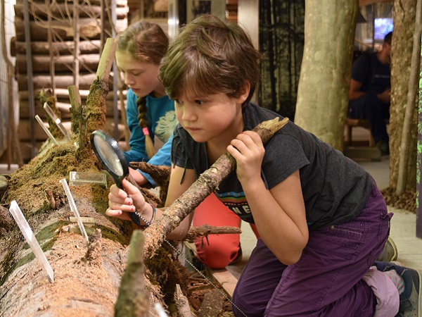 Kinder beim Erforschen
