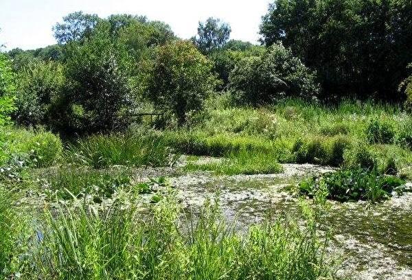 Biotop Kuhgraben