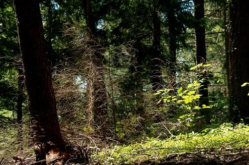 Egerkinger Wald