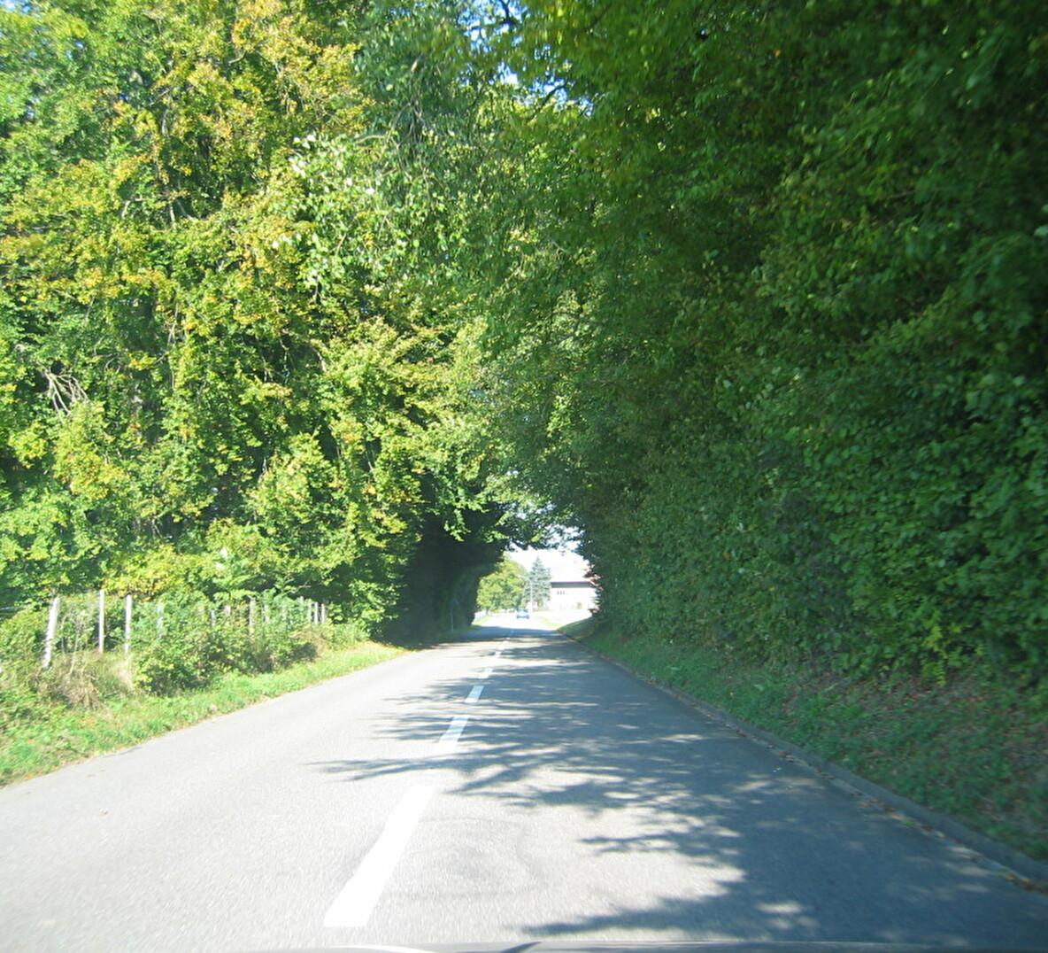 Aarwangenstrasse, Oberwynau