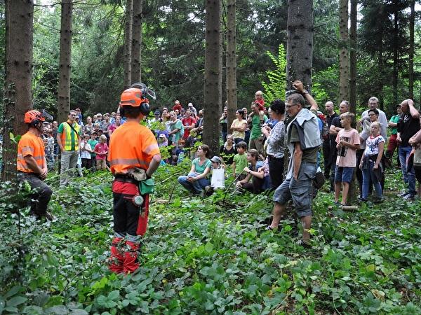 Baumfällen am Waldtag 2016 im Roterwald