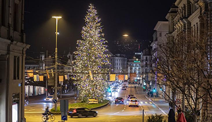 Weihnachtsbaum Hofkirche