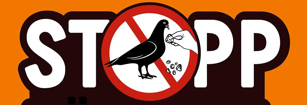 Tauben nicht füttern