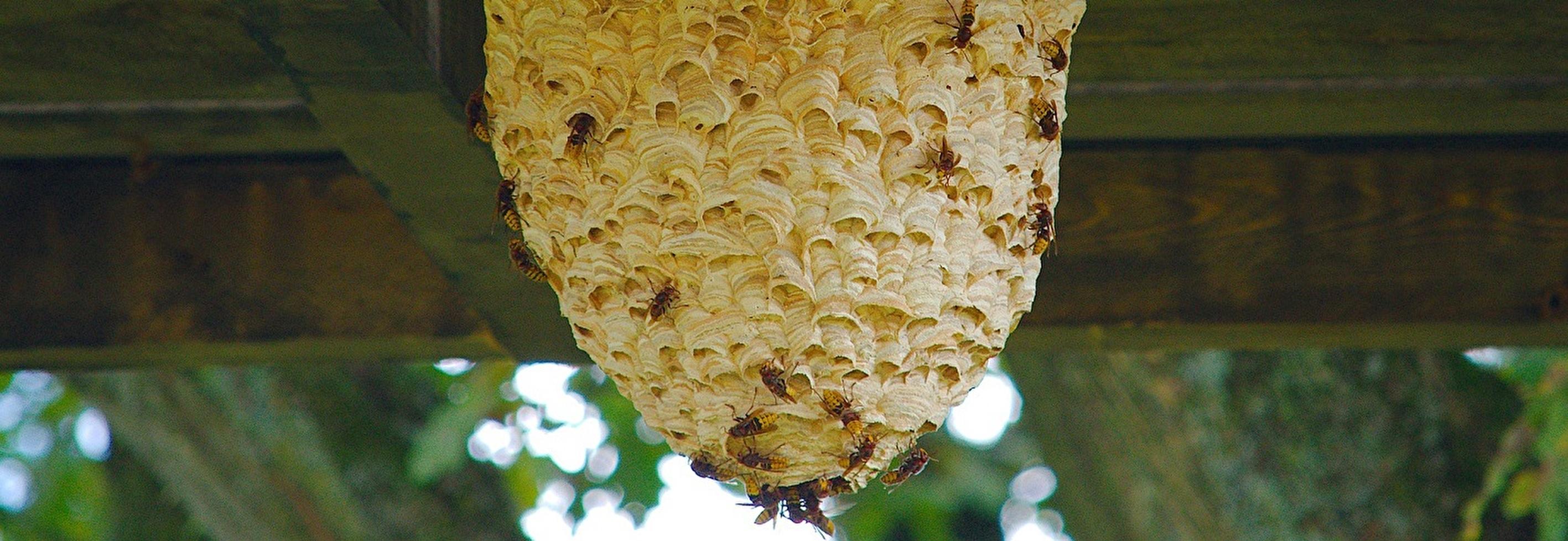 Praxiskurs Umgang mit Wespen