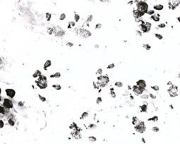 Igelspuren