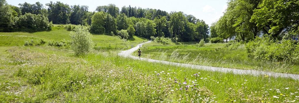 Massnahmenpaket zur Förderung der Artenvielfalt in der Stadt Luzern