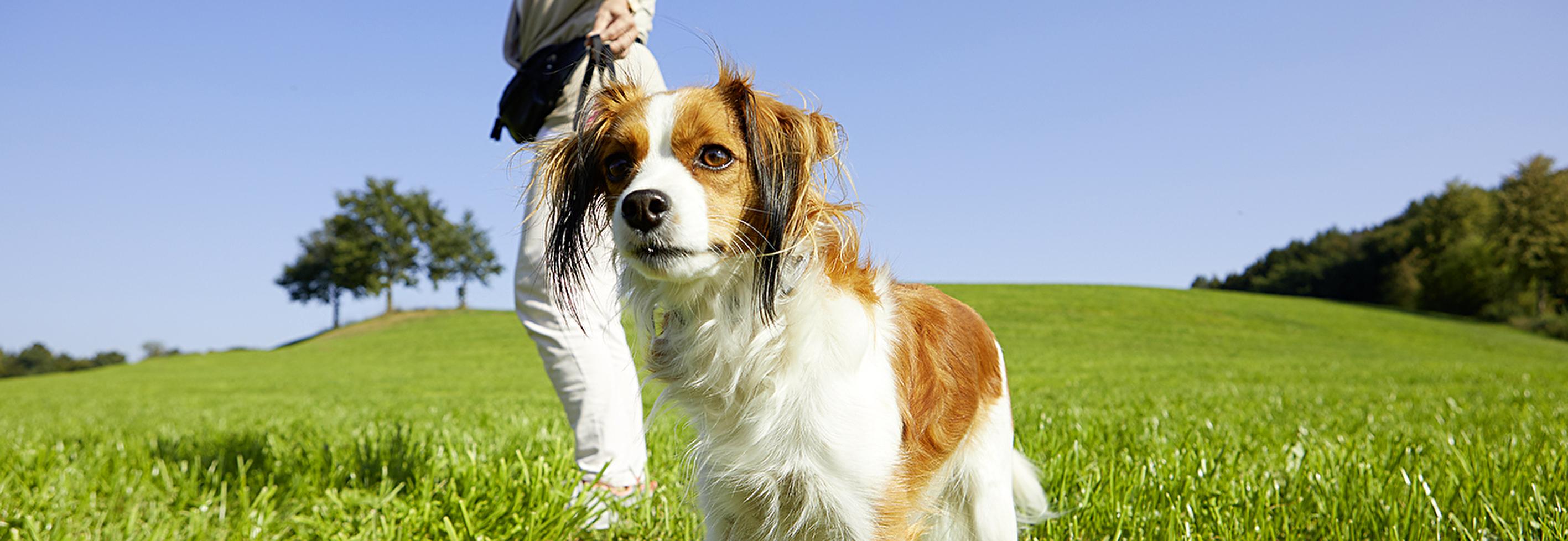 Informationen für Hundehalter