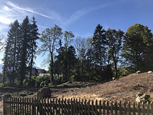 Bäume Donnerbach