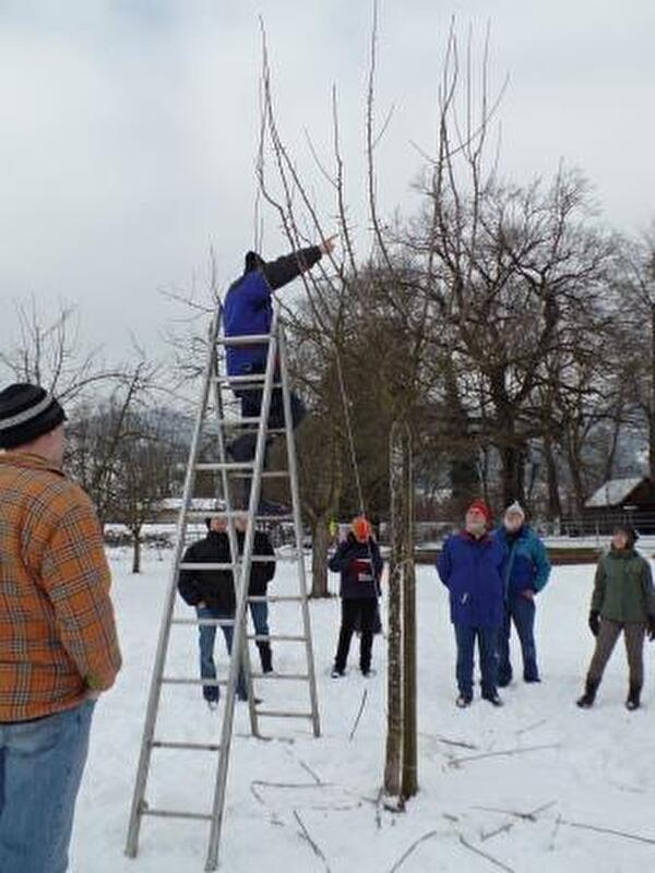 Baumschneidekurs in Lüchingen am 7. Februar 2015