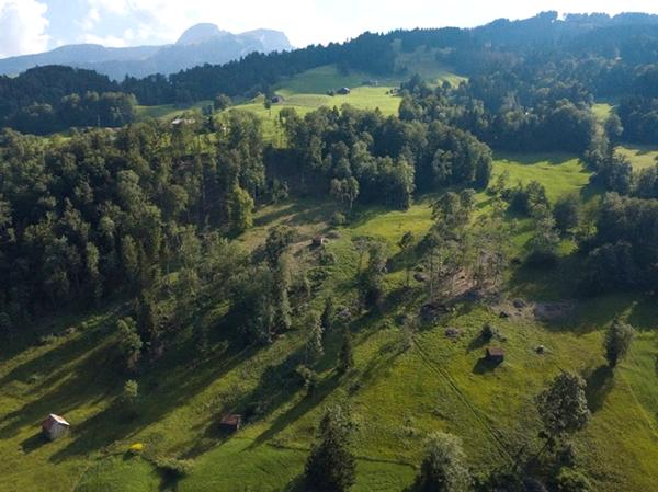Waldrand-Auslichtung bei Moorflächen