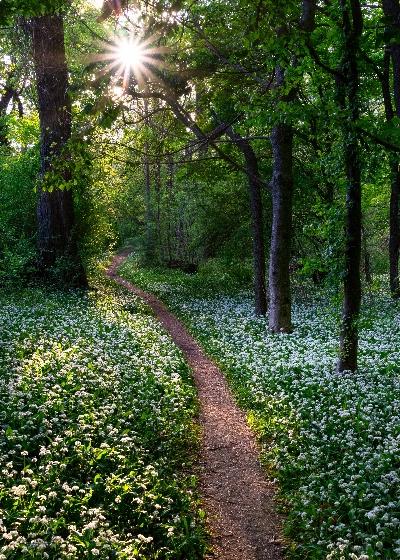 Natur Weg