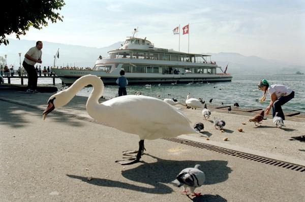 Vogelwelt