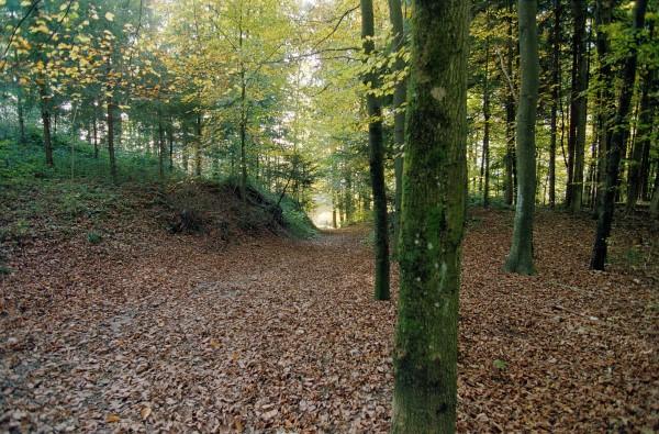 Waldreservat