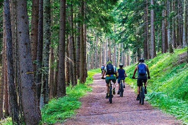 Velofahrer im Wald