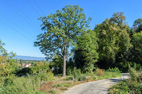 Waldlehrpfad, Eichenmischwald, Wanderweg