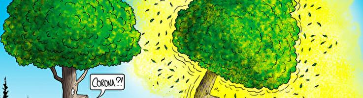 Forêt Suisse