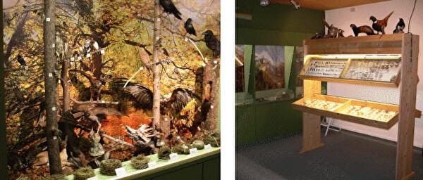 Naturmuseum Oberhasli