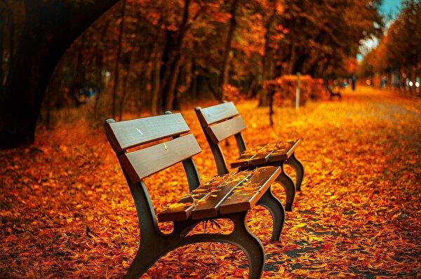 Herbststimmung (Foto)