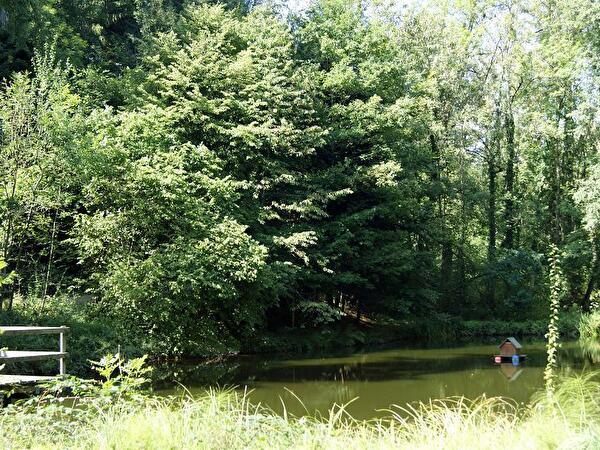 Weiher im Wald mit Entenhaus