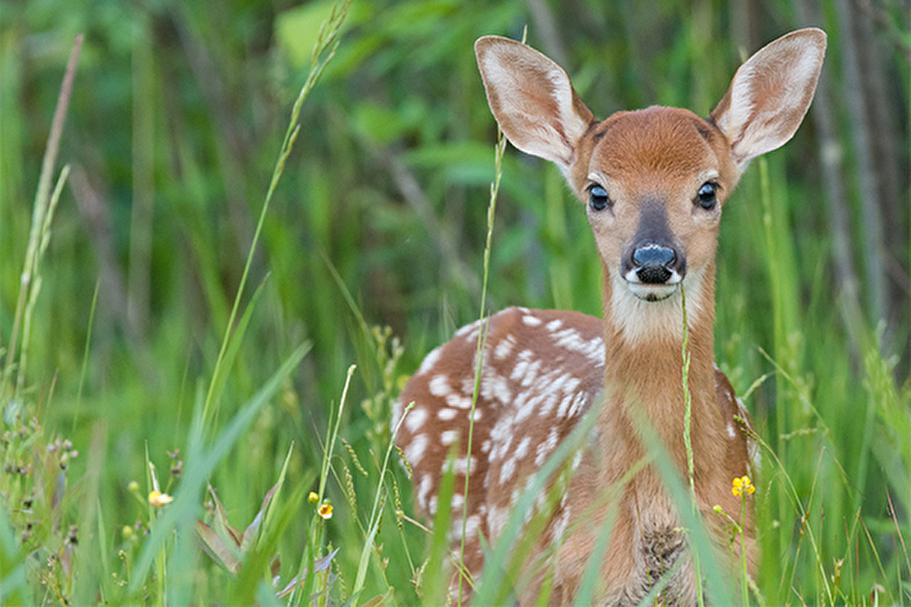 Ein junges Reh im Gras