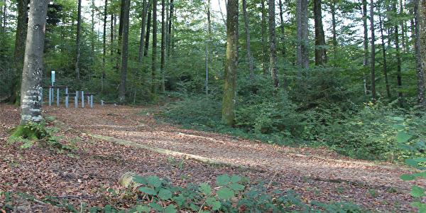 Finnenbahn im Nordholz Wald