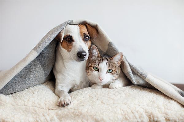 Hund und Katz gemeinsam friedlich auf einem Fell liegend