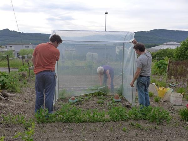 Das neue Tomatenhaus im Bauergarten steht