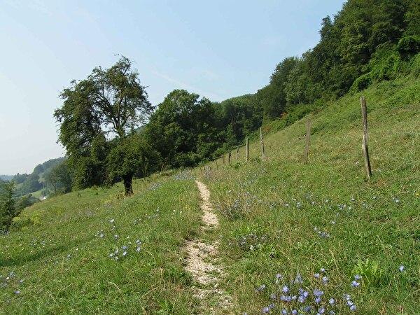Naturschutzgebiet Ruttigen